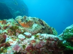 stonefish !!!!