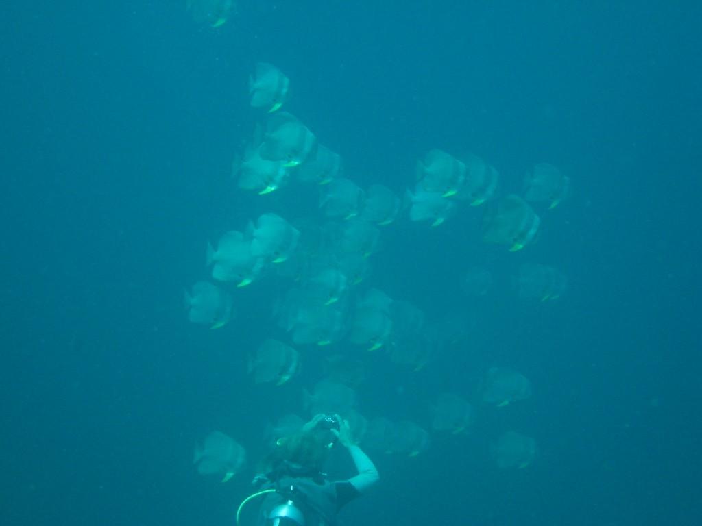 batfish und clive