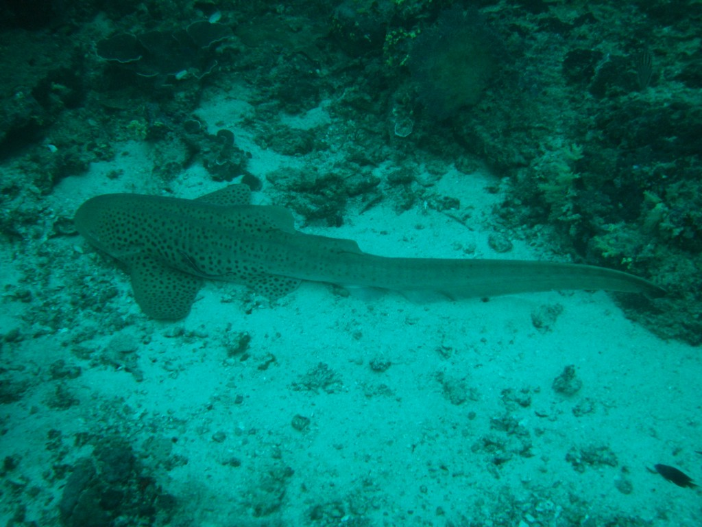 leopard-shark am morgen