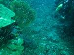 glasfishsoup